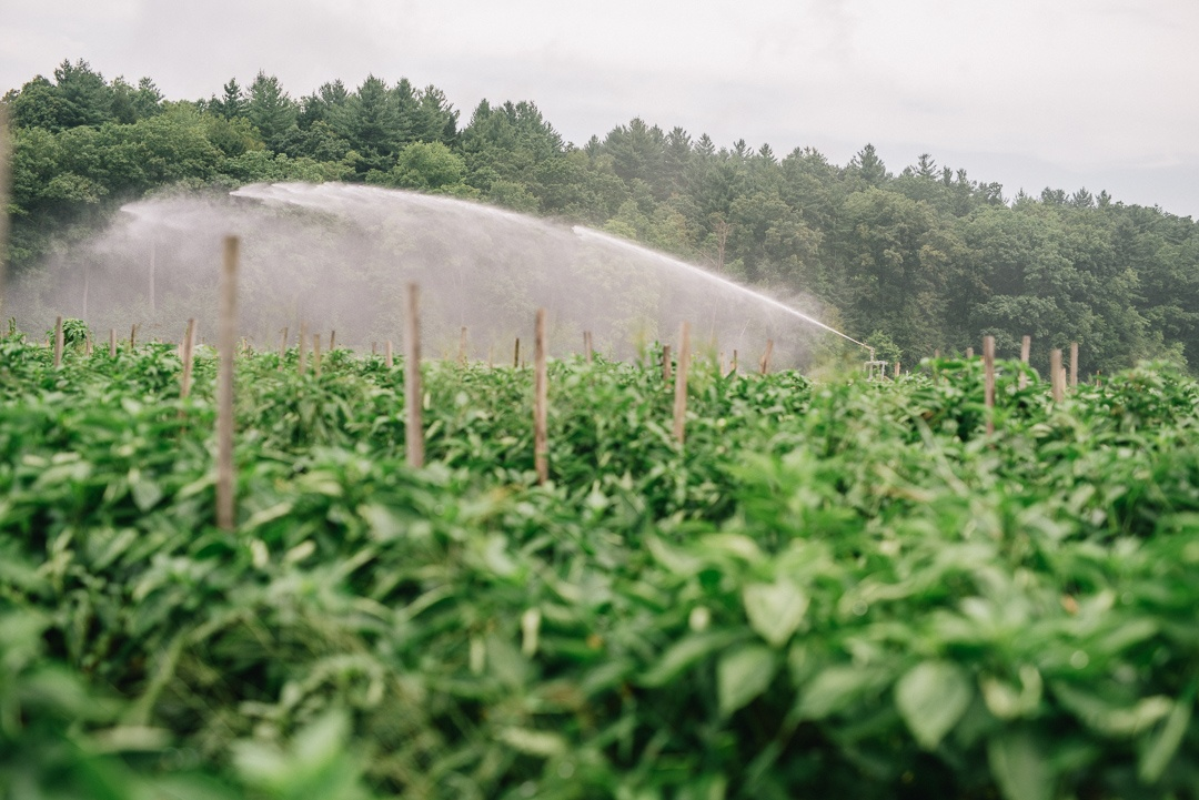 Boston Organics - A Sprinkler at Atlas Farm