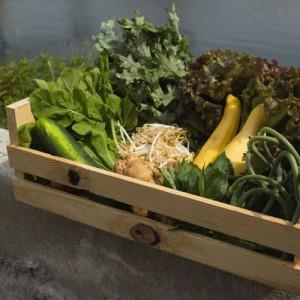 Dogma Box 27   Local Organic
