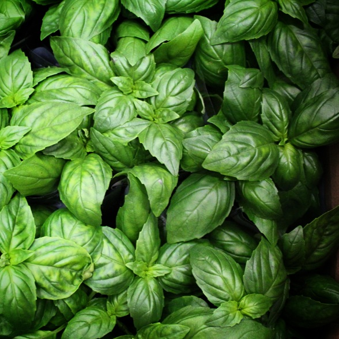 Basil leaves | Boston Organics
