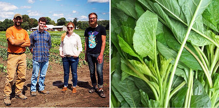 Farm Visit Callaloo | Boston Organics