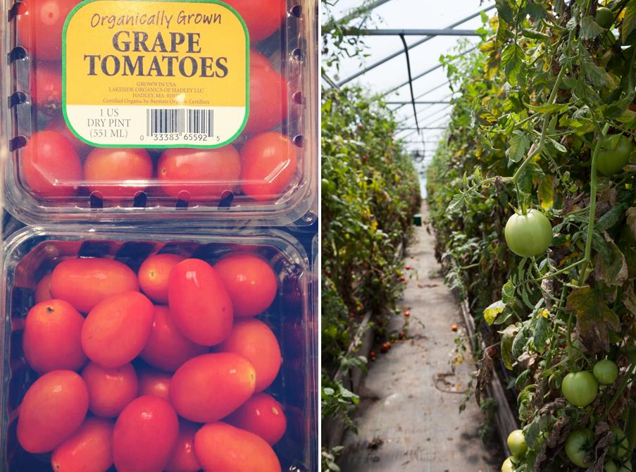 Organic Tomatoes | Newsletter 35