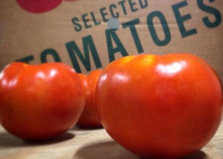 Organic Field Tomatoes | Oxen Hill Farm