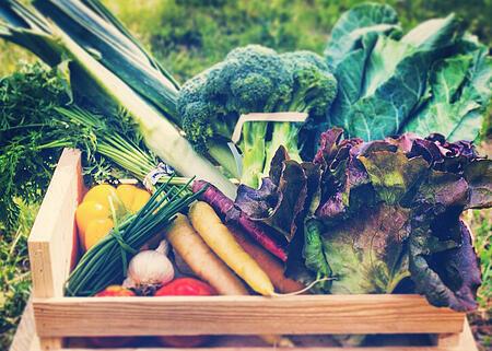 Dogma Box week 37 | Boston Organics