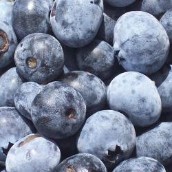 Local Organic Blueberries