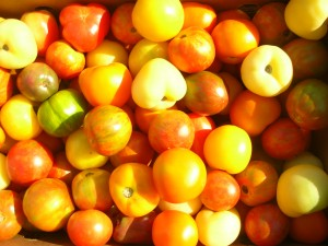 Atlas Farm Baby Heirloom Tomatoes