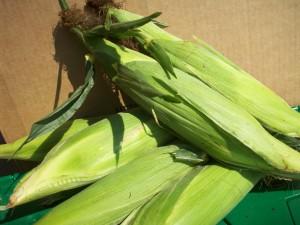 Local Organic Corn
