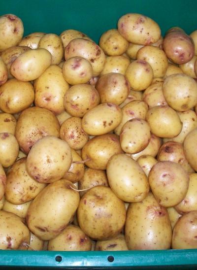 Atlas Gold Potatoes
