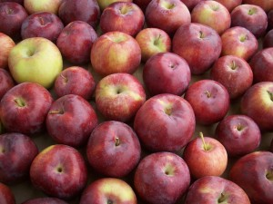 Dwight Miller Orchards Organic Apples