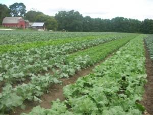 Atlas Farm Field