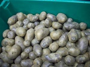 Atlas Farm Blue Potatoes