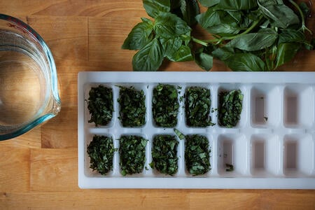 Preserving Fresh Basil | Boston Organics