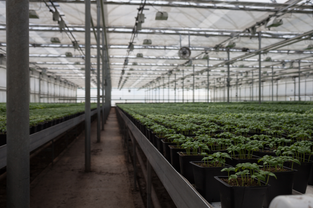 Happy Vally Organics Greenhouse | Boston Organics