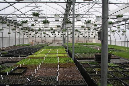 Red Fire Farm Greenhouse | Boston Organics