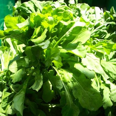 Atlas Farm Organic Arugula