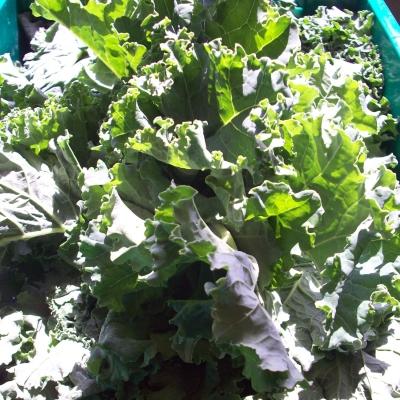 Atlas Farm Organic Kale