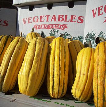 Organic Delicata Squash