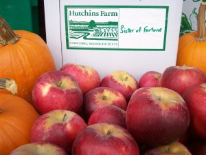 Organic Massachusetts Apples