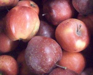 Local Organic Apples