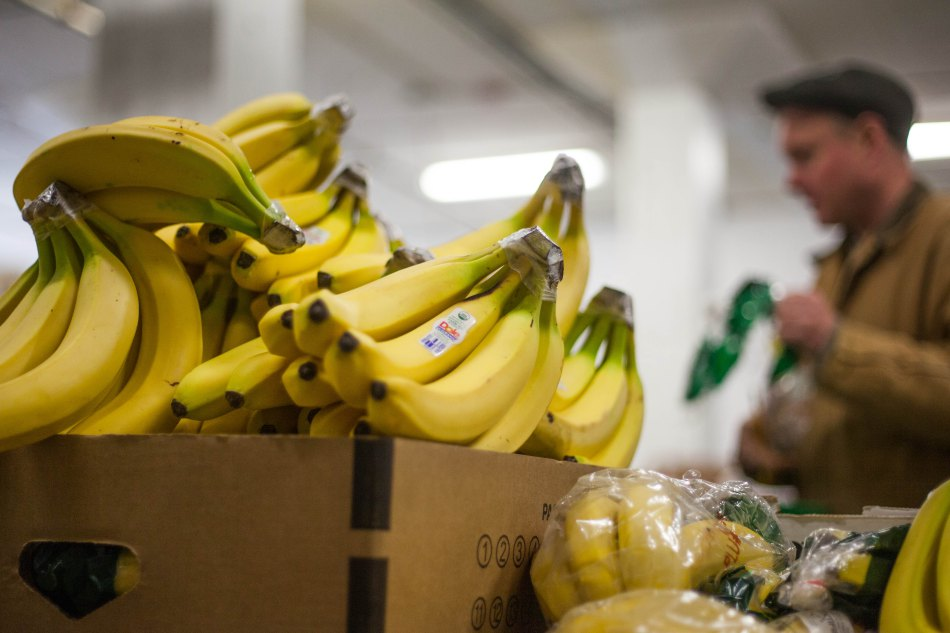 Organic Banana | Packing Boston Organics