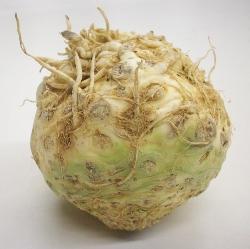 Celeriac | Celery Root