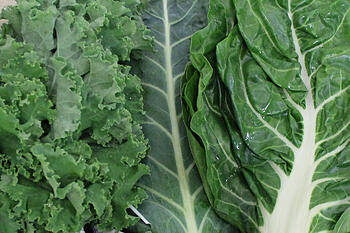 Leafy Greens | Boston Organics