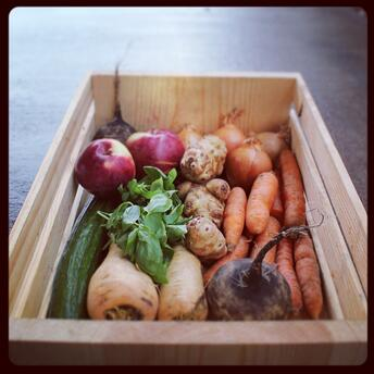 Dogma Box | Local Organic
