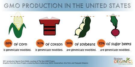 GMO Percentage Infographic | Boston Organics