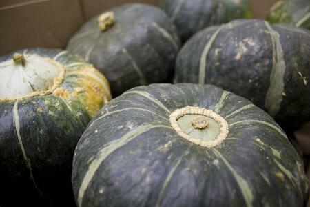 Buttercup Squash | Boston Organics