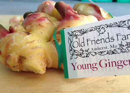 Young Ginger from Old Friends Farm | Boston Organics