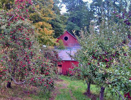 Organic Apple Orchard | Boston Organics