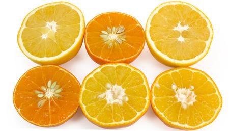 Citrus slices | Boston Organics