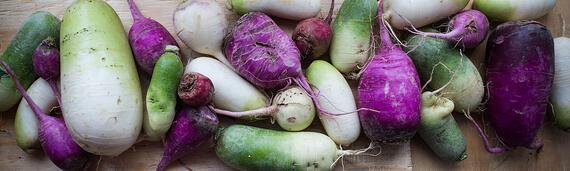 Colorful Mixed Radishes   Boston Organics