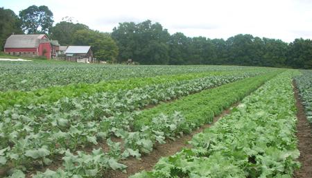 Atlas Farm | Boston Organics