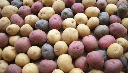 Rainbow Potatoes    Boston Organics