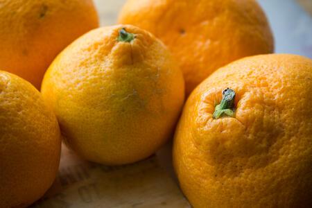 Citrus Update | Boston Organics