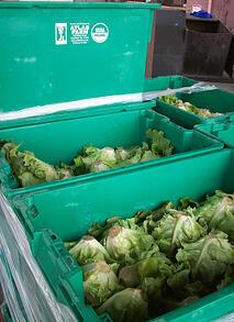 Atlas Farm Organic Lettuce