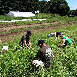 Boston Organics Volunteering
