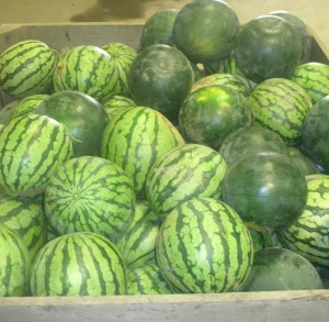 Atlas Organic Watermelon