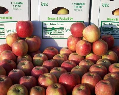 Hutchins Farm Spencer Apples