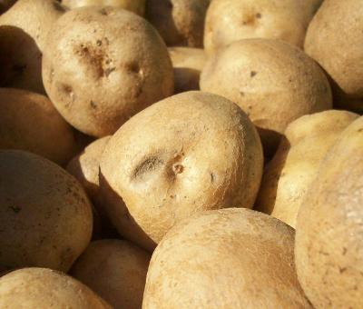 Atlas Farm White Potatoes