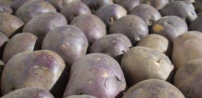 Misty Meadows Purple Sun Potatoes