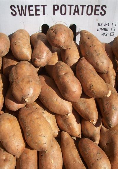 North Carolina Organic Sweet Potatoes