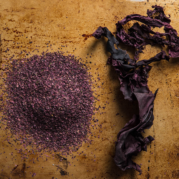 20180403-seaweed-guide-vicky-wasik-dulse-combo_600px