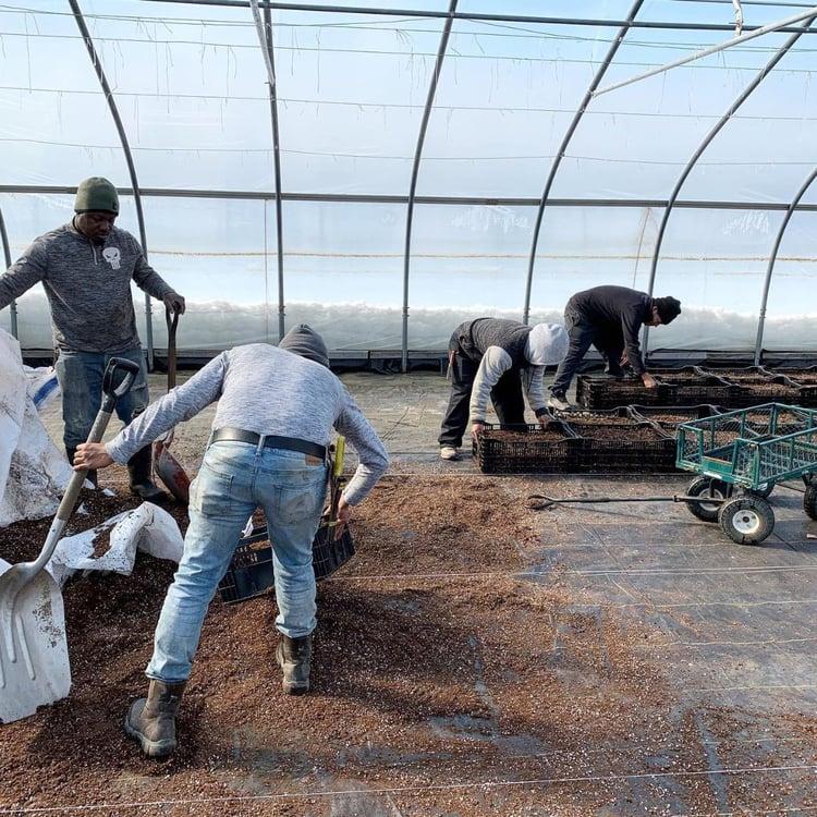 atlas_farm_mar_2020_newsletter_greenhouse