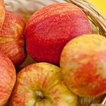 Gala Apple (c) Wikimedia Commons   Sven Teschke