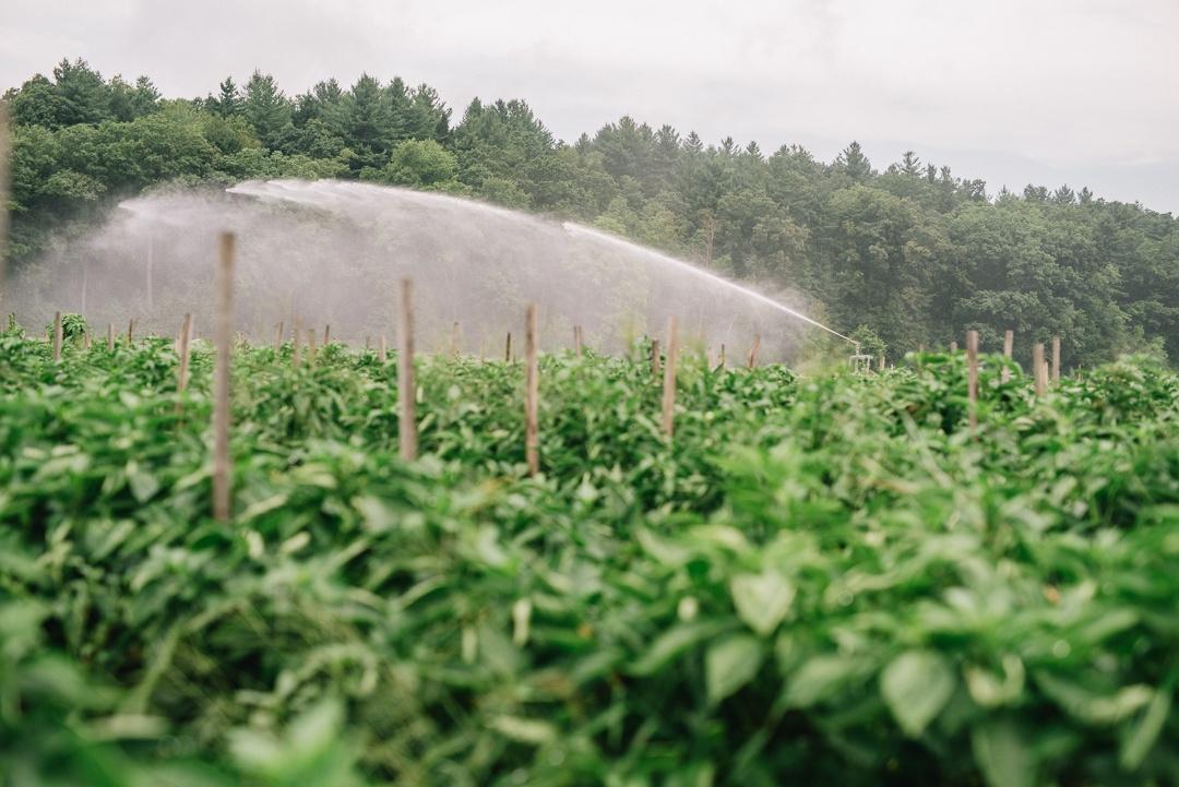 Boston Organics - A Sprinkler at Atlas Farm