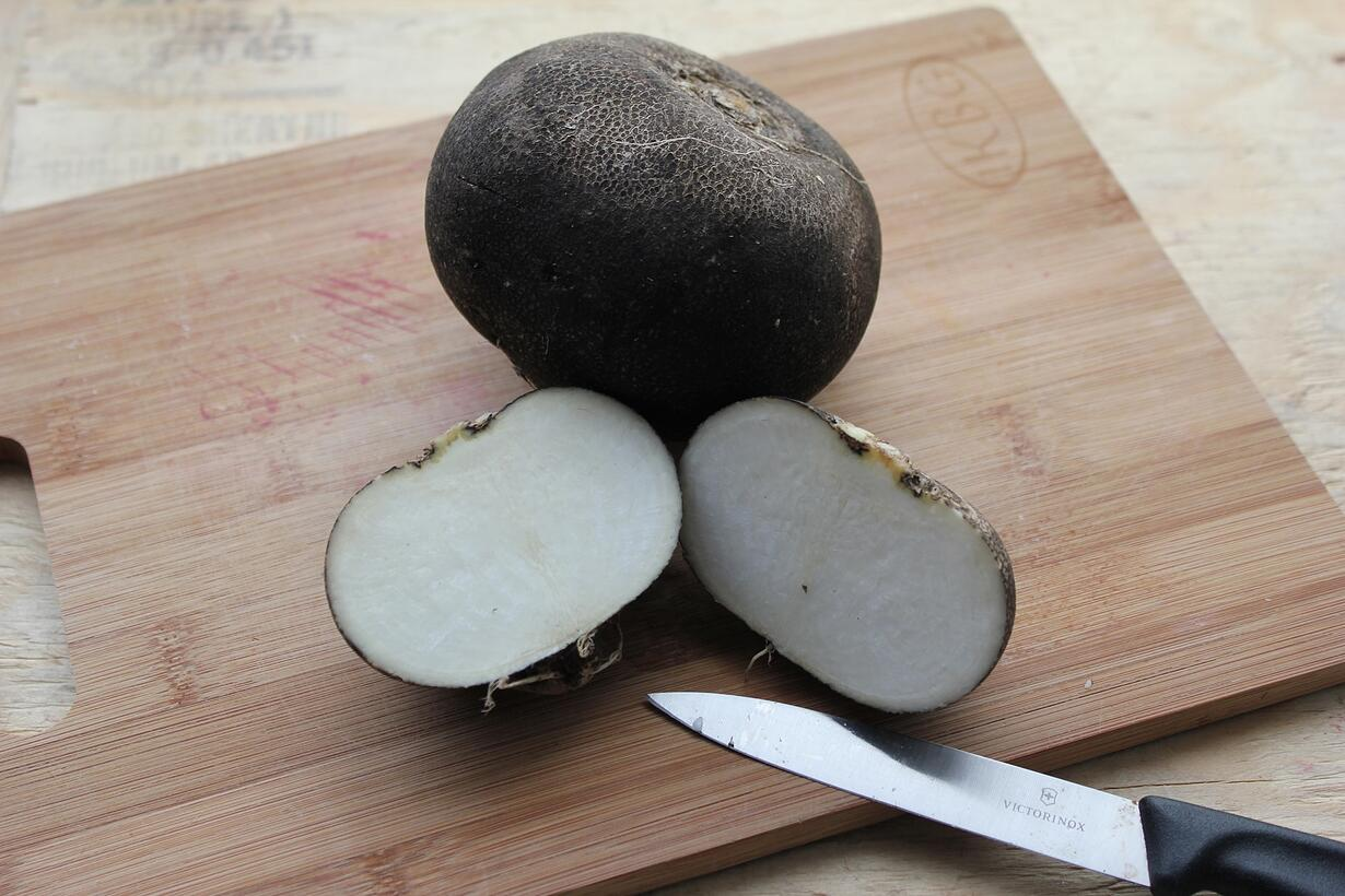 Boston Organics - Black Radish