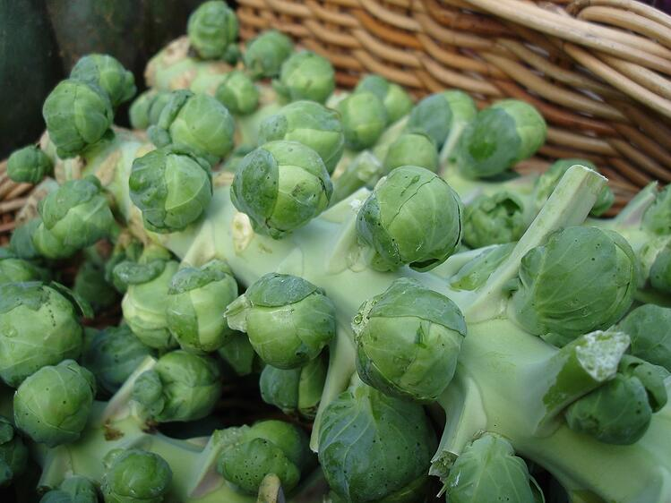 Boston Organics - Brussels Sprouts on the Stalk