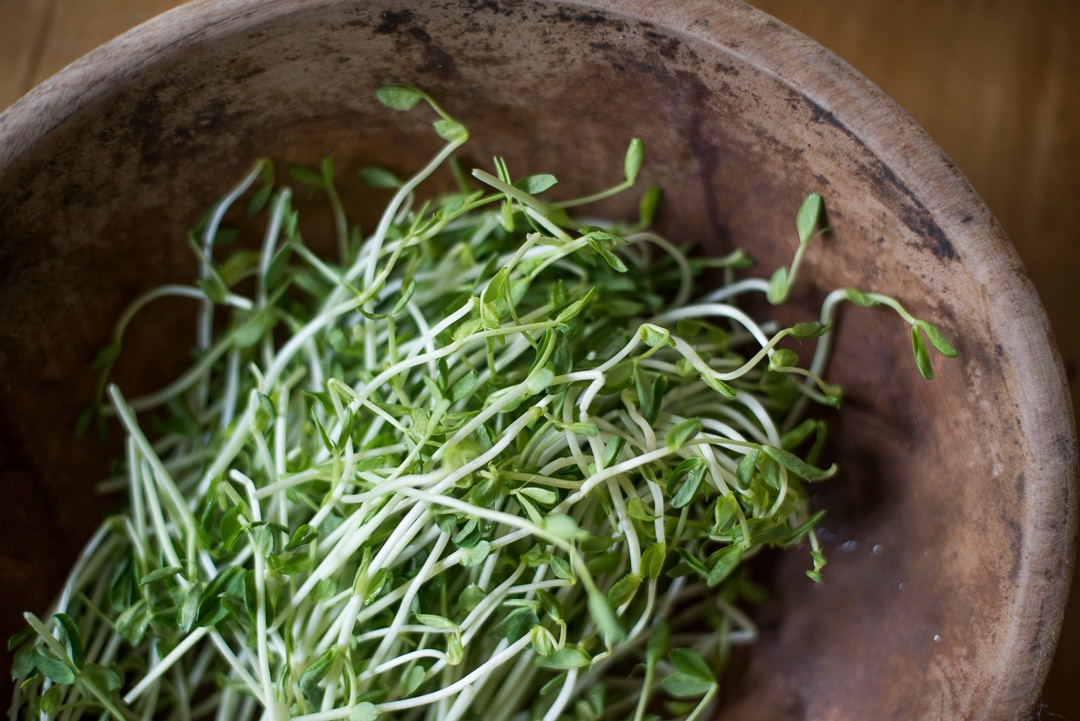 Boston Organics - Pea Shoots