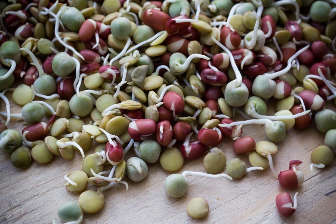 Boston Organics - Munchin' Mix